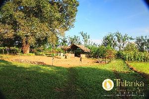 Hotel Thilanka Resort And Spa
