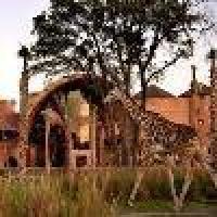 Hotel Disney's Animal Kingdom Villas - Kidani Village