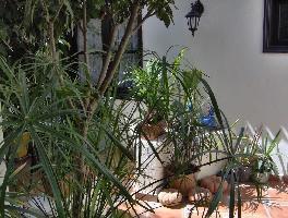 435102) Apartamento En Icod De Los Vinos