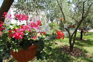 467873) Apartamento En El Centro De Sveti Filip I Jakov Con Aire Acondicionado, Aparcamiento, Balcón