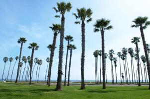 Hotel The Fess Parker- A Doubletree By Hilton Resort