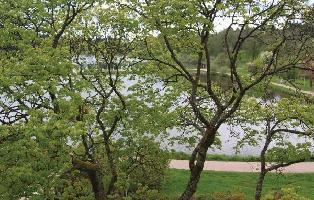 214547) Apartamento En Goslar Con Jardín